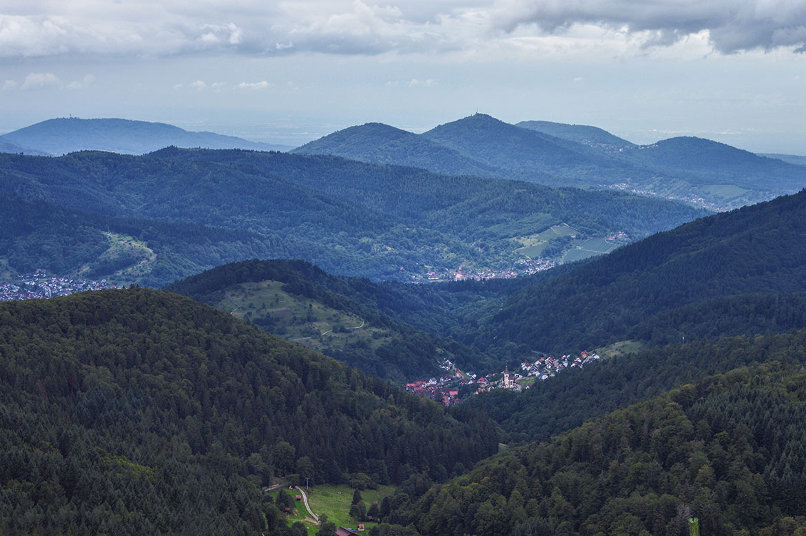Black Forest view from Schwarzmiss
