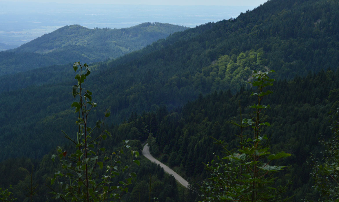 Black Forest Road
